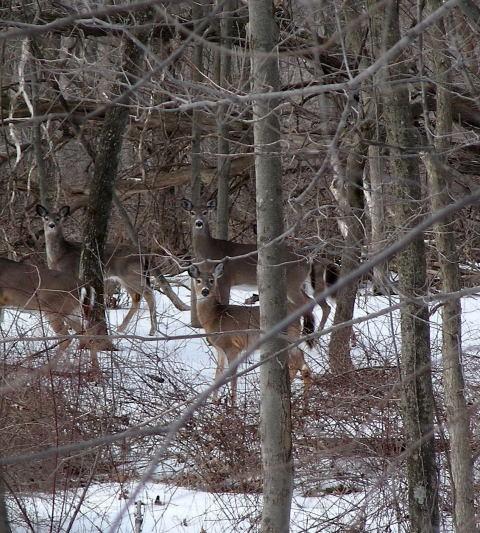 deer-3_13_0720002.JPG