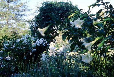 garden-arch-with-vines.jpg