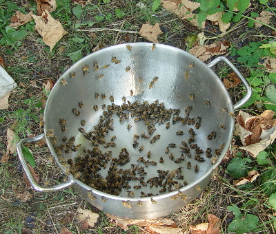 10-bees-cleaning-kettle-07.jpg