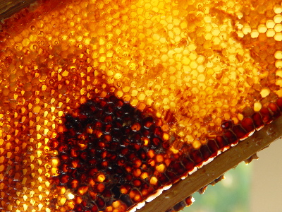 6-darklight-honey.jpg