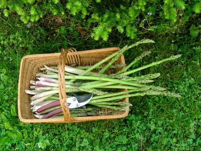 asparagus-07.jpg