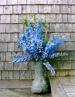 delphiniums-on-porch.jpg