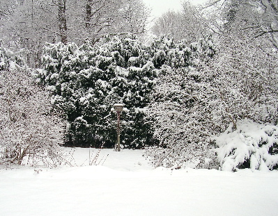 greenhouse-view-snow.jpg