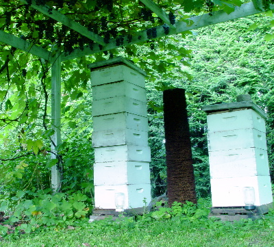 hives-and-grapes-07.jpg