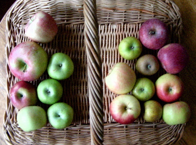 apple-varieties.jpg