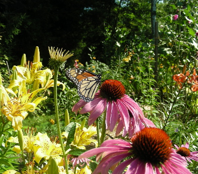 echinacea-and-lilies.jpg