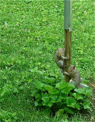 baby squirrels at birdfeeder