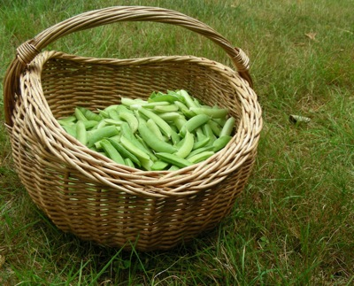 ideal pea-gathering basket