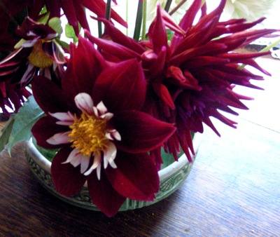 Could the red and white one be dahlia 'Mary Eveline?