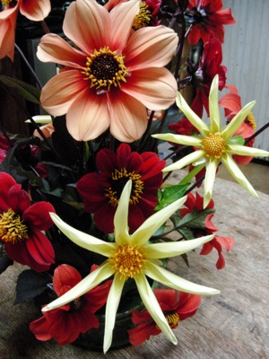 dahlias Honka and Bishop's Children