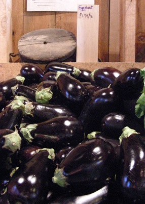 freshly harvested eggplants