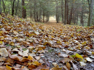 A heavy blanket of leaves on the forest floor can protect mushrooms from frost, but may make it hard to find them