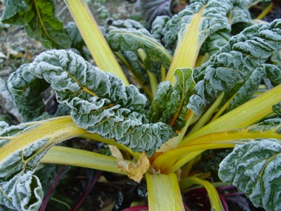 Heavy frost in the garden