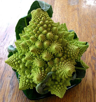 Typical head of Romanesco, @ 9 inches tall and maybe 7 inches wide