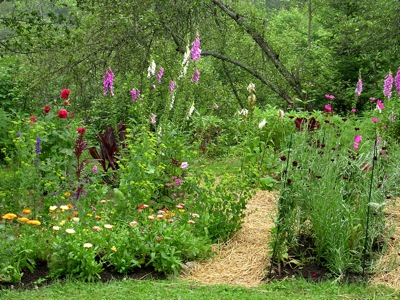 wide beds in Maine garden