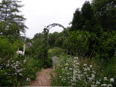 sapling arch in the white garden