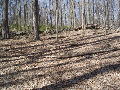 Typical Black Morel Habitat