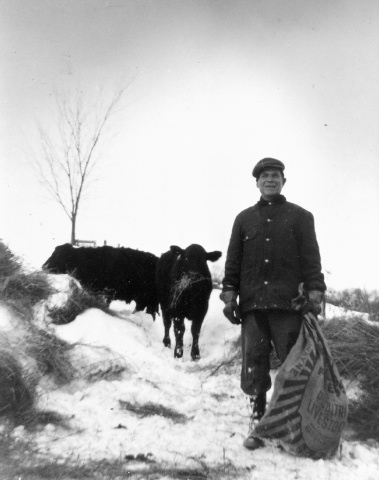 Fred Cario, my granddad, tending his cattle, mid winter, in the mid '50's.