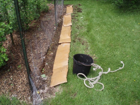A layer of soaked cardboard, an additional weed barrier and a Paul Stametes recommended enhancement is laid as a foundation.