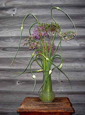 allium bouquets