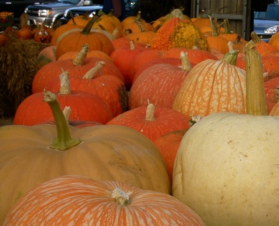 To avoid the same old supermarket same old, stock up on winter squash while you can still buy it from a farmer.