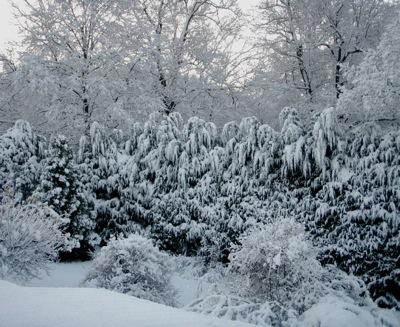 snowy yard 7-15 12:06