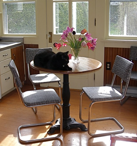 retro table and chairs with black cat