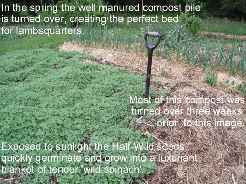 turning a compost bed