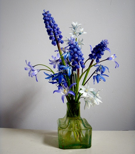 spring bulbs: muscari, chionodoxa,scilla, puschkinia