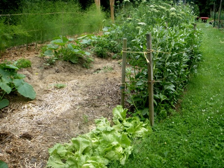 garden bed with lettuce, peas and squash