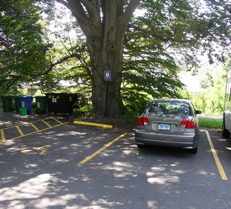 beech with encroaching parking lot