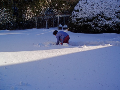 deep snow, shoveling path