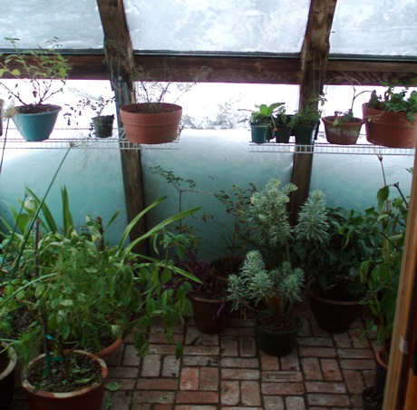 snowbound greenhouse from inside
