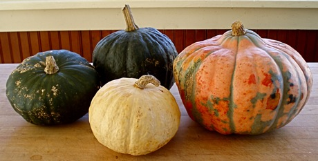 buttercup, tetsakabuto, candy roaster melon, queen of smyrna squash