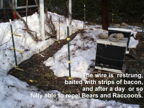 restored electric bee fence after heavy snow