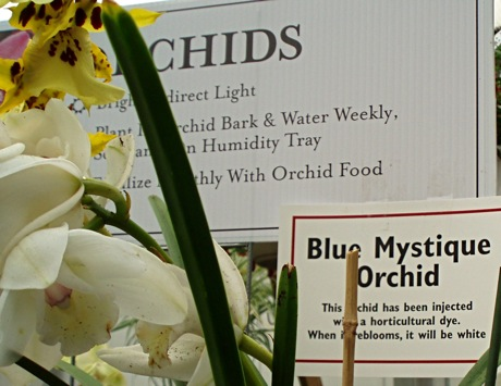 warning sign for dyed orchid