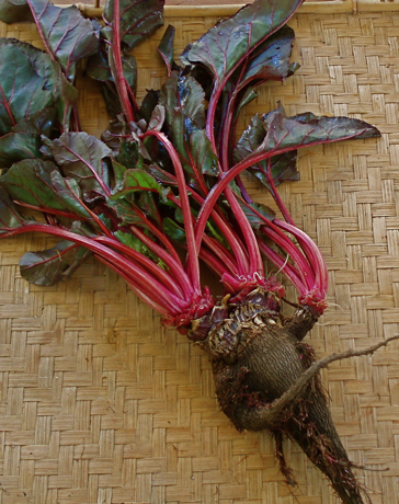 Crapaudine beet with greens
