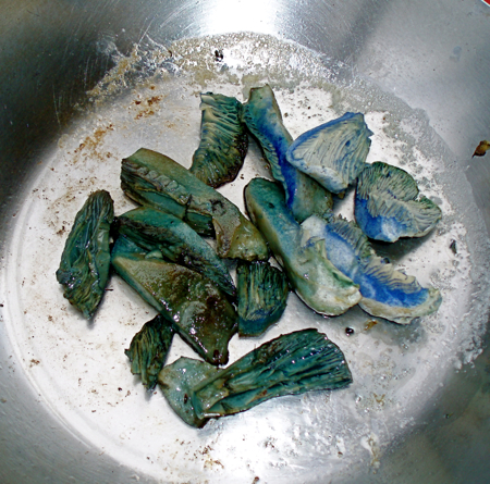 lactarius indigo, cooked and uncooked