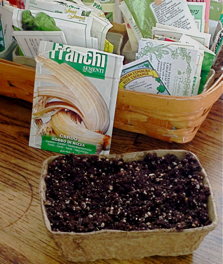 seed starting container and soil
