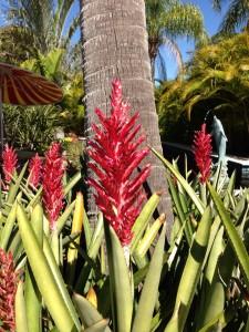 blooming bromeliads